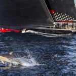 Comanche Takes Line Honors in the Rolex Sydney Hobart Race 2015